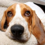 chem-dry-south-east-pet-stain-removal